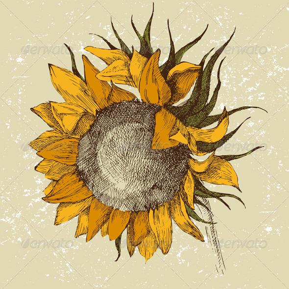 Hand Drawn Sunflower - Flowers & Plants Nature