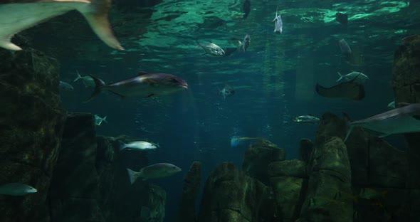VideoHive Fishs 20402158