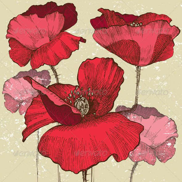 Poppy Flowers - Flowers & Plants Nature
