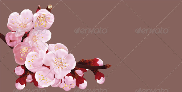 Sakura - Flowers & Plants Nature
