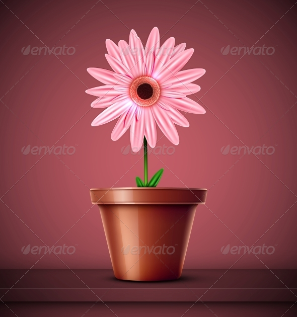 Flower in Pot - Flowers & Plants Nature