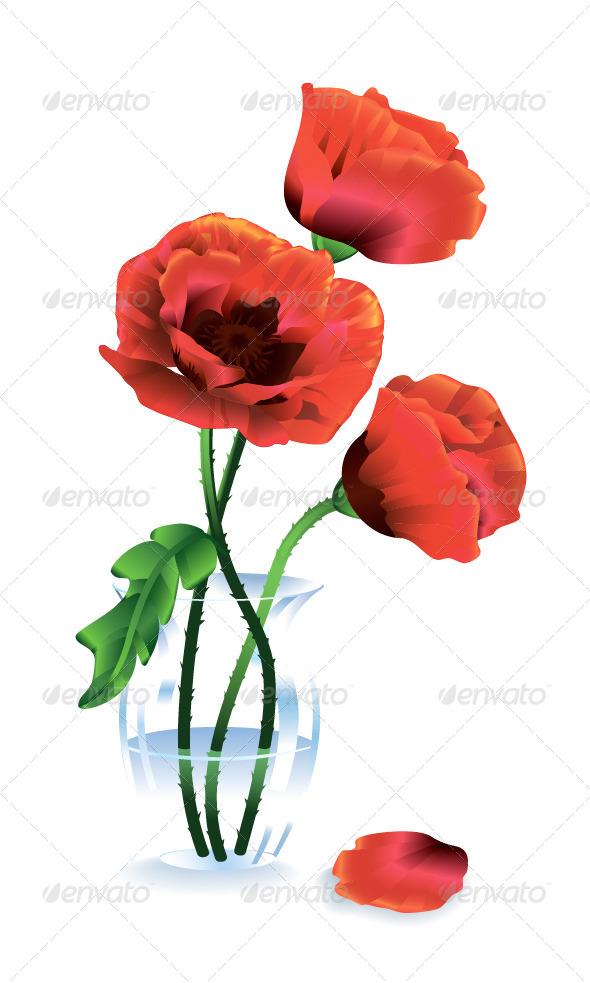 Silk Red Flowers Poppies - Flowers & Plants Nature