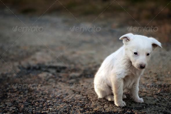 sad dog - Stock Photo - Images
