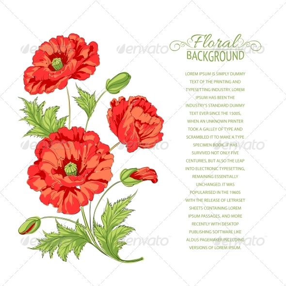 Red Poppy Card - Flowers & Plants Nature