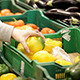 Woman In A Supermarket Choosing Vegetables - VideoHive Item for Sale