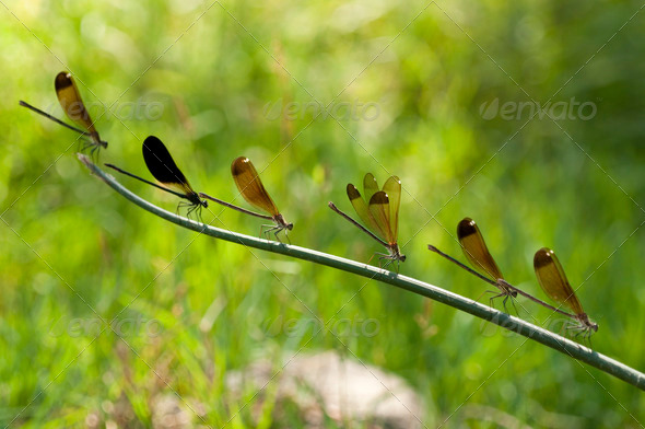 Row of Damselfly - Stock Photo - Images