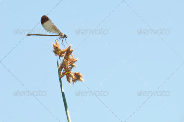 Damselfly on a Spike - Stock Photo - Images