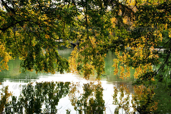 Tree branches hanging over lake - Stock Photo - Images