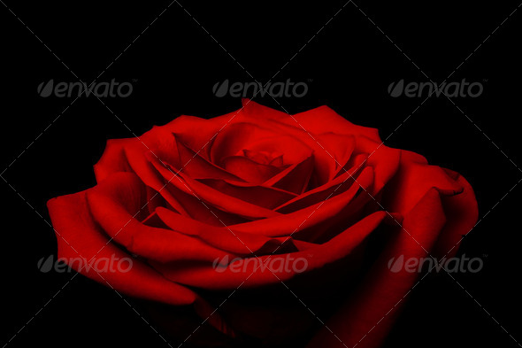 Layers of love petals - red rose - Stock Photo - Images