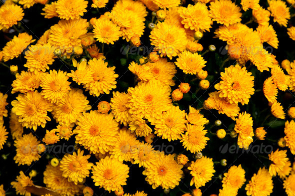 Collection of yellow orange flowers - Stock Photo - Images
