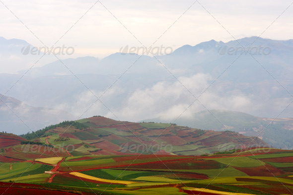 Fields landscapes - Stock Photo - Images