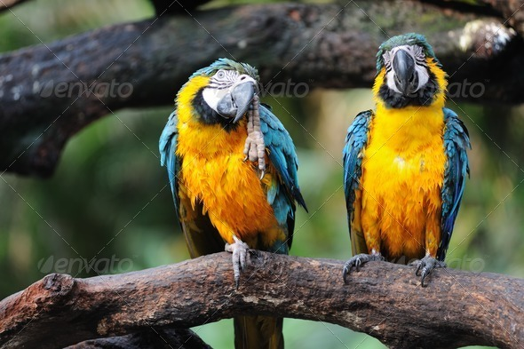 Parrot birds - Stock Photo - Images