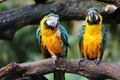 Parrot birds - PhotoDune Item for Sale