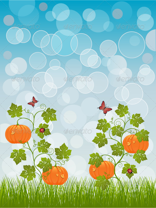 Abstract background with a pumpkin - Flowers & Plants Nature