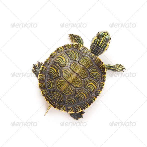 turtle - Stock Photo - Images