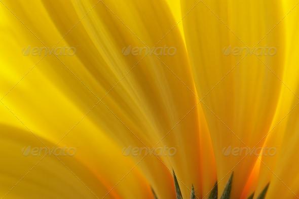 Petals - Stock Photo - Images