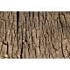 old stump - GraphicRiver Item for Sale