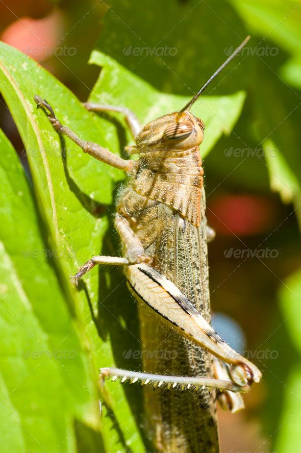 Locust detail - Stock Photo - Images