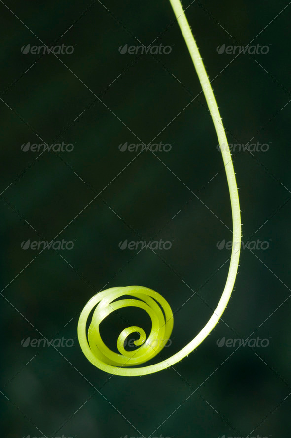 Green Tendril of Crawling Plant - Stock Photo - Images