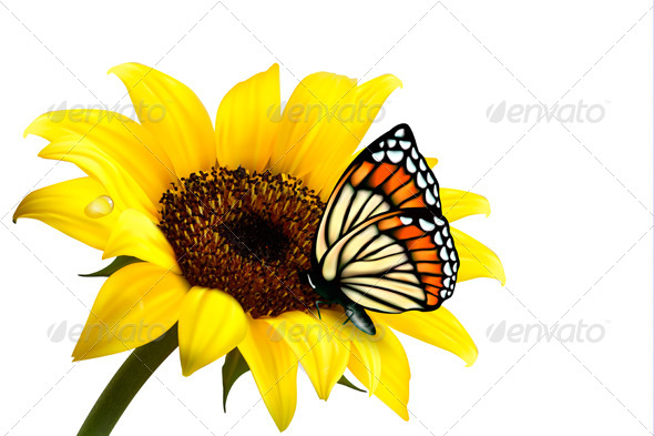 Nature Summer Sunflower with Butterfly. Vector - Flowers & Plants Nature