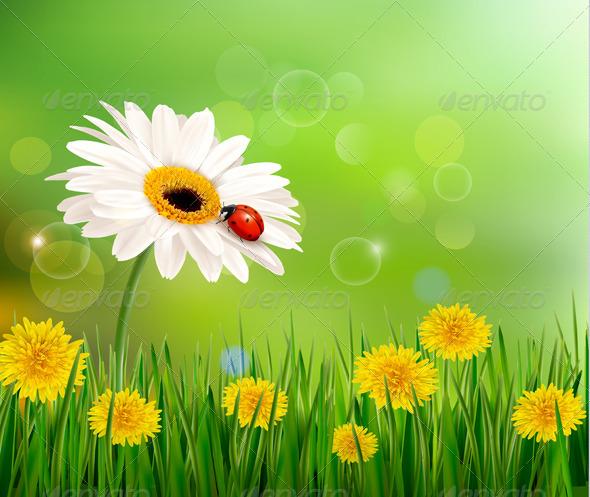 Nature Background with Ladybug on White Flower - Flowers & Plants Nature