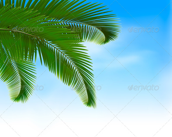 Palm Leaves on Blue Background. - Flowers & Plants Nature