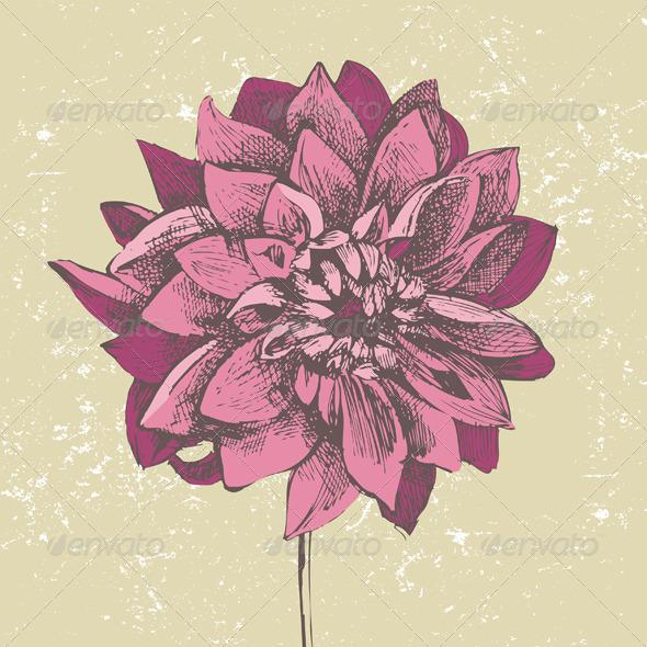 Dahlia Flower - Flowers & Plants Nature