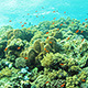 Coral Reef 2 - VideoHive Item for Sale