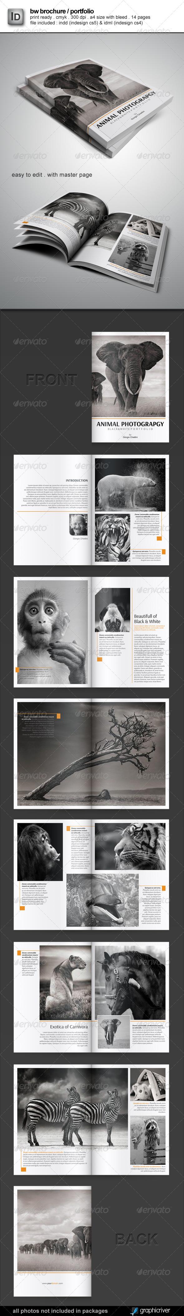 Brochure / Portfolio Template - Portfolio Brochures
