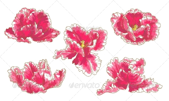 Set of 5 Tulip Flowers - Flowers & Plants Nature