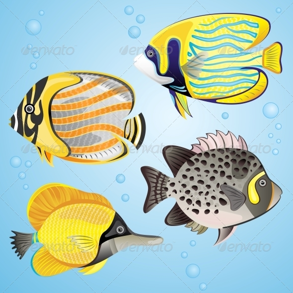 Exotic Fish Set - Organic Objects Objects