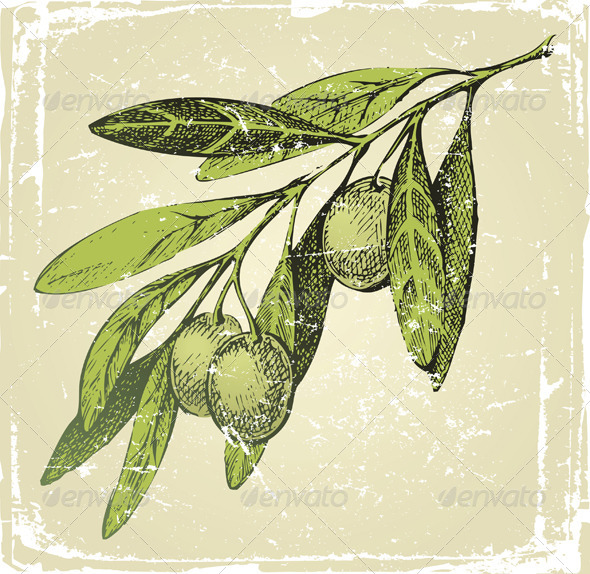 Hand Drawn Olive Branch - Food Objects