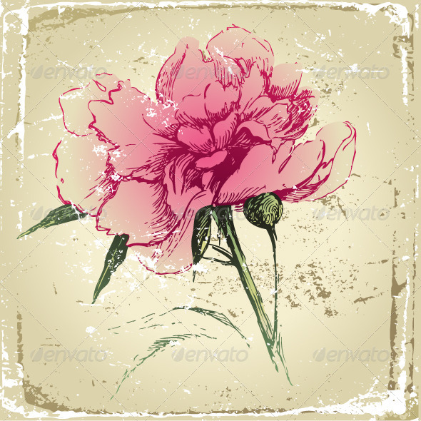 Hand Drawn Peony Flower - Flowers & Plants Nature