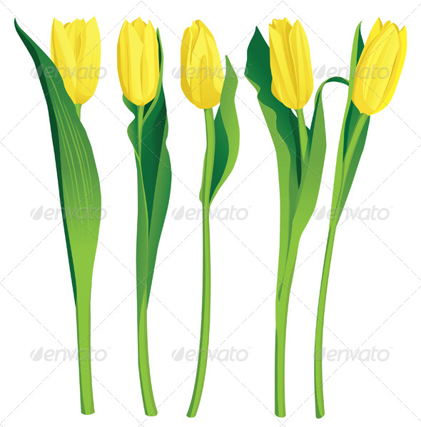 Yellow Tulips - Flowers & Plants Nature