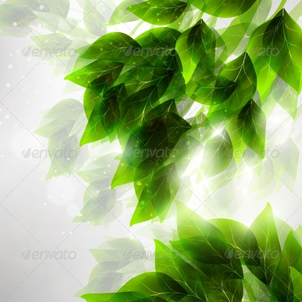 Beautiful Green Leaves - Flowers & Plants Nature