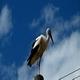 Stork 2 - VideoHive Item for Sale