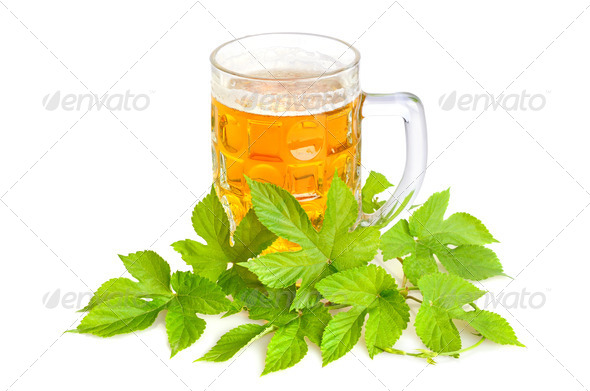 Beer and hop - Stock Photo - Images