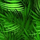 Plants Jungle - VideoHive Item for Sale