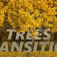 Trees Transition Autumn - VideoHive Item for Sale