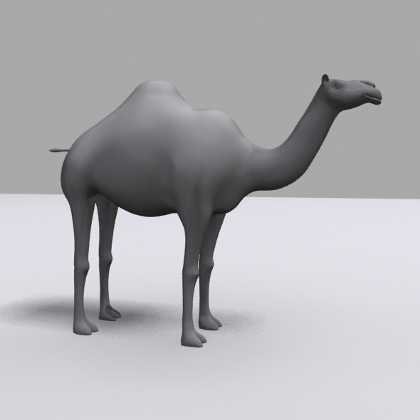 3D Camel Model - 3DOcean Item for Sale