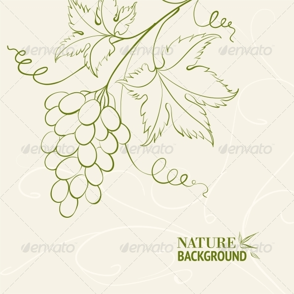 Grape Wine Card. - Flowers & Plants Nature