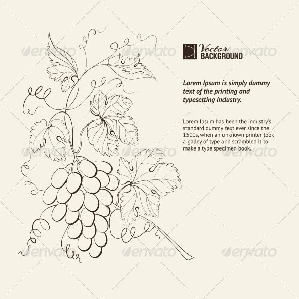 Engraving of Grapes Branch. - Flowers & Plants Nature