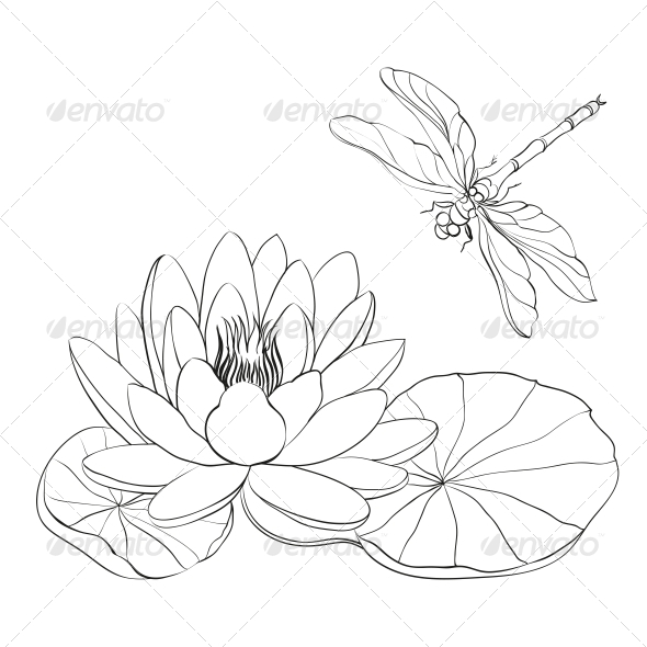 Water Lily and Dragonfly. - Flowers & Plants Nature