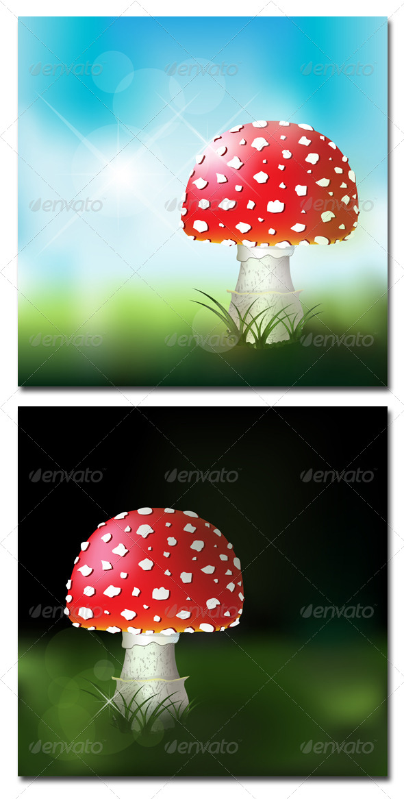 Fly Amanita - Flowers & Plants Nature