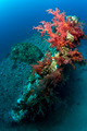 Wreck of dunraven red sea - PhotoDune Item for Sale