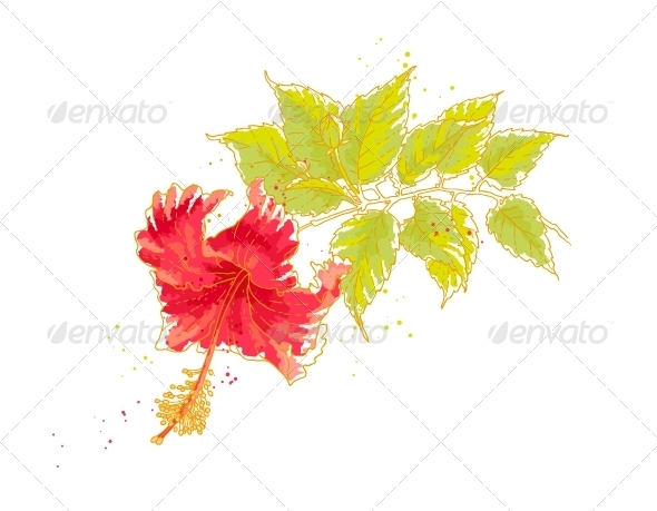 Hibiscus Flower, Isolated on White Background - Flowers & Plants Nature