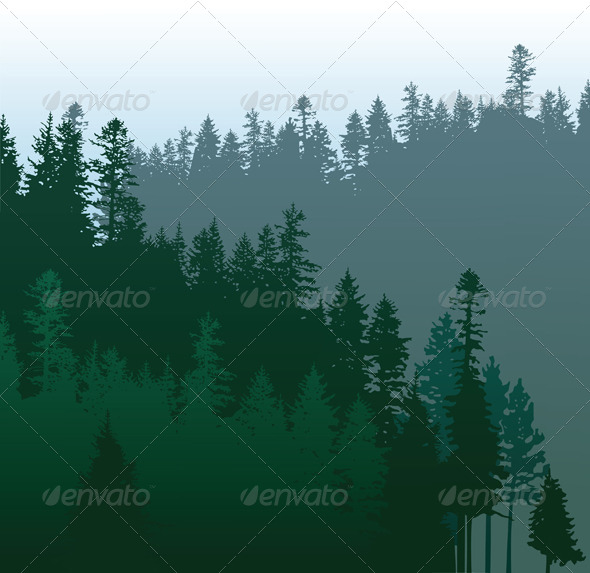 Coniferous Forest - Landscapes Nature