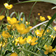 Yellow Flowers on River Banks - VideoHive Item for Sale
