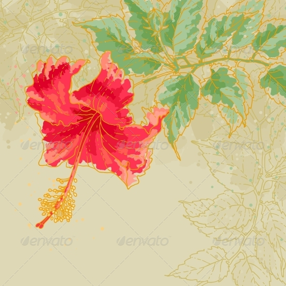 Hibiscus Flower on Toned Background - Flowers & Plants Nature
