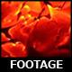 Dollar Spotlight 25 - VideoHive Item for Sale